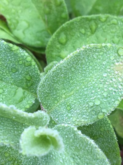 Dew in the morning Green Color Leaf Full Frame Freshness Nature Plant Leaf Vein Beauty In Nature Blacksburg Creation Peace And Quiet