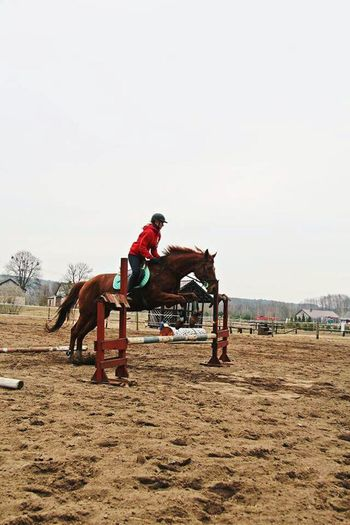 Horse jumping Horse Riding Horse Sport Horse Jumping Enjoying Life That's Me Relaxing