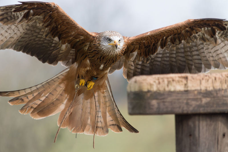 Close-up of red kite flying by wooden railing