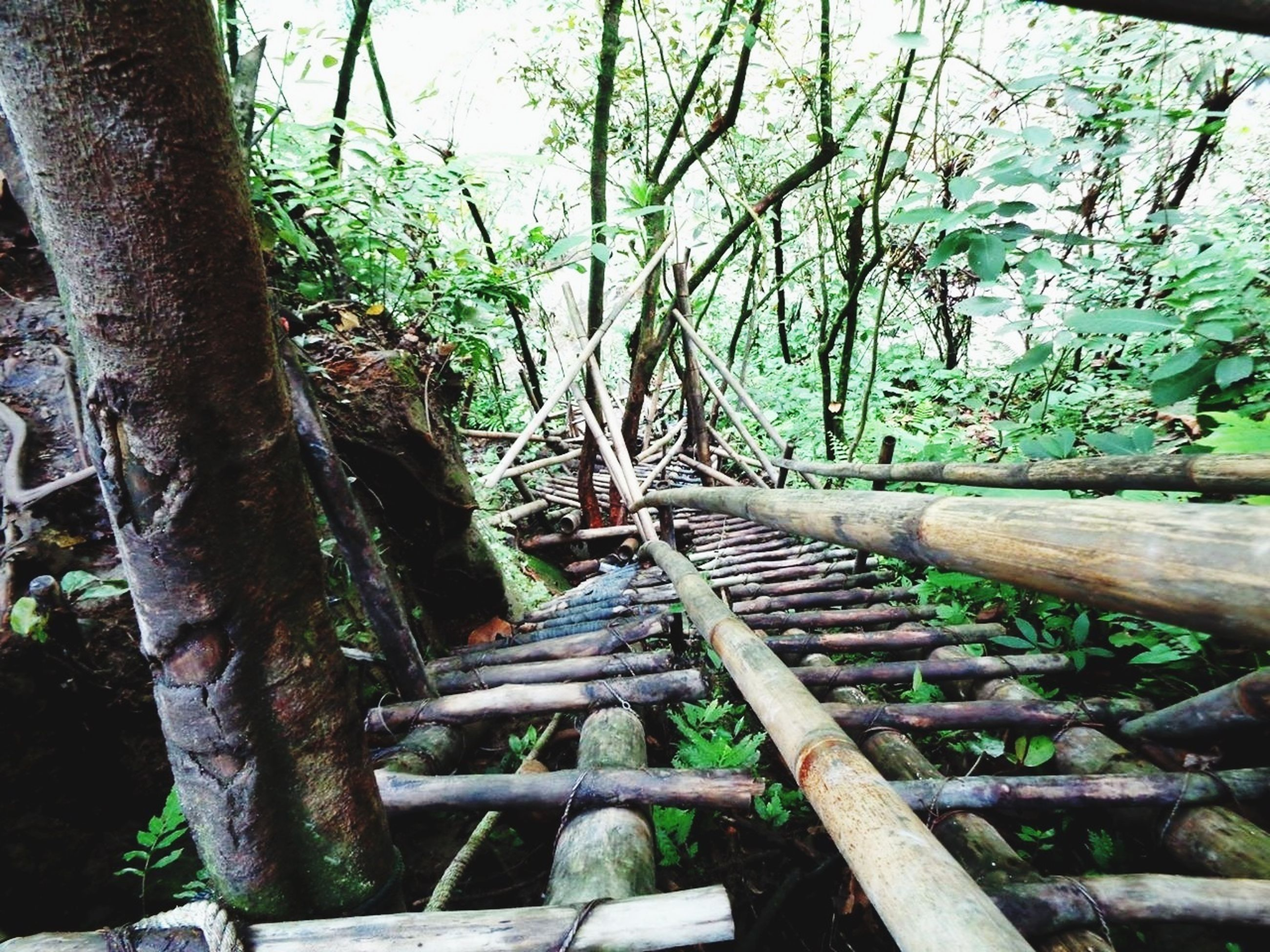 tree, growth, wood - material, tree trunk, tranquility, nature, branch, the way forward, railing, plant, forest, green color, steps, tranquil scene, outdoors, day, beauty in nature, no people, sunlight, footbridge