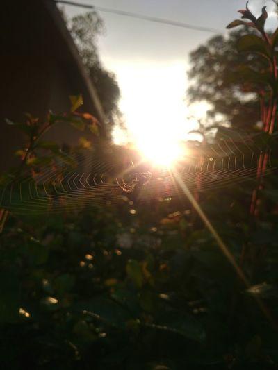 Taking Photos Nature Hello World Enjoying Life Silhouette Sunset Web Spider