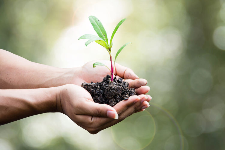 Cropped Image Of Hands Holding Plant
