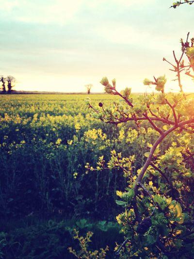 Spring Yellow Landscape Eye4photography