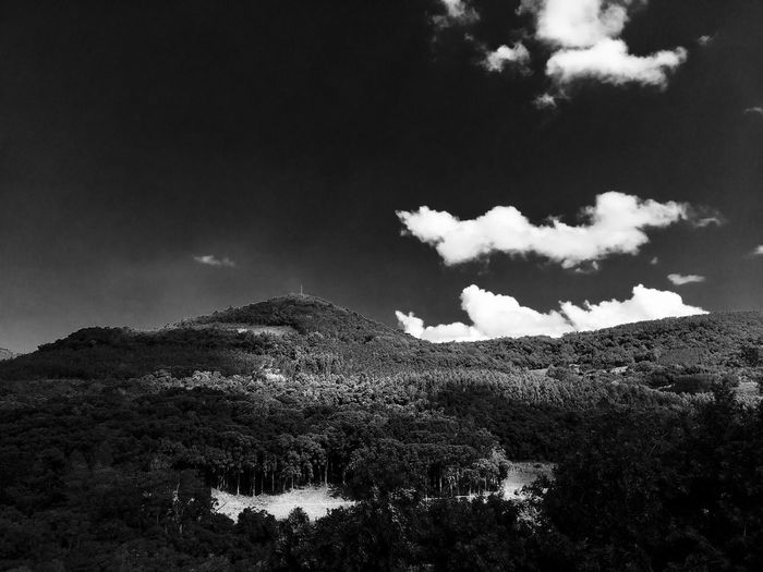 Bright sky, Dark Forest . Theme Dark Mountain Abstact Sky Black Forest Forest B&w Black And White Bw Beauty In Nature Tranquil Scene Tree Low Angle View Scenics - Nature Outdoors Day Growth Landscape Land Environment Non-urban Scene Field Idyllic