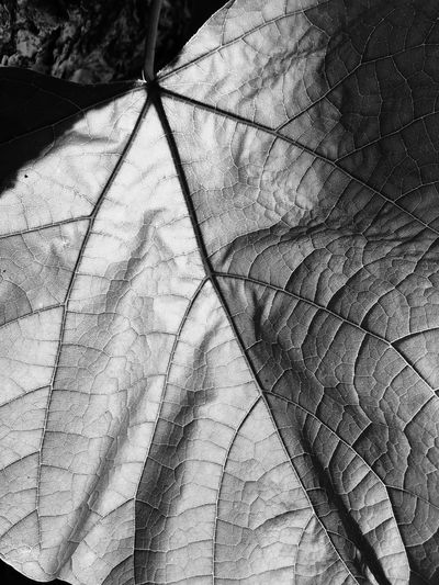 EyeEmNewHere The Week On EyeEm Perspectives On Nature Black And White Friday EyeEm Ready   AI Now Love Yourself Visual Creativity 10