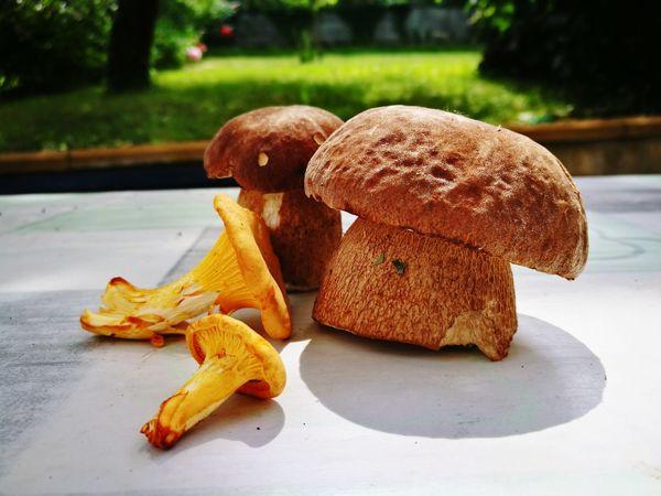 Forest treasure Summer Picking Mushrooms Treasure Forest Hobby Food Close-up Blooming In Bloom Flower Head Fungus Served Mushroom