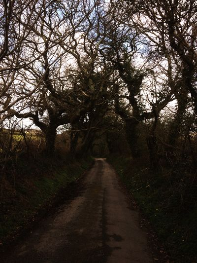 Showcase April Nature Country Life Trees Country Road Lanes Getting Away From It All Cornwall England
