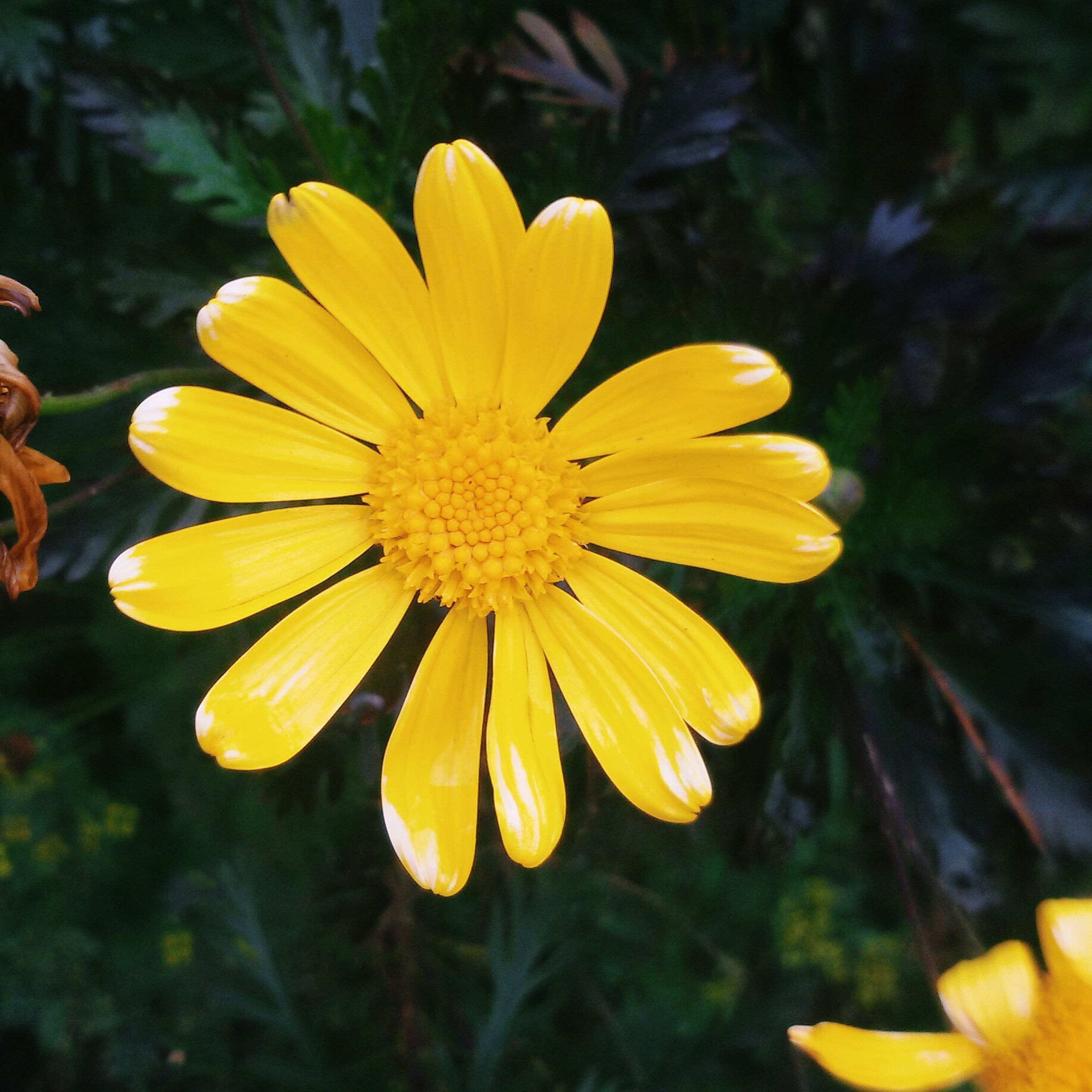 flower, petal, yellow, freshness, fragility, flower head, close-up, growth, focus on foreground, beauty in nature, blooming, pollen, single flower, nature, plant, in bloom, day, outdoors, water, no people