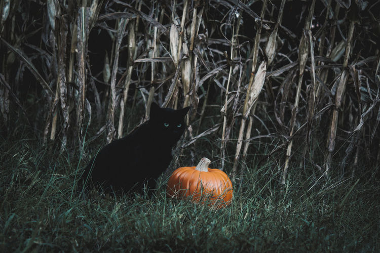 View of cat and pumpkin on field