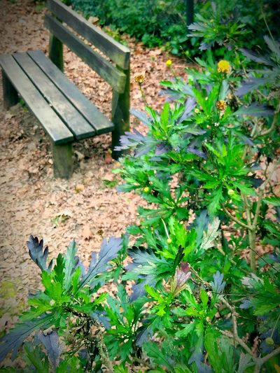 Plant Nature Outdoors Growth No People Day Grass Leaf Beauty In Nature Green Color Forestseat Tables And Chairs Forestphotography Nofiltersrequired Close-up Forest Road Nature Park - Man Made Space Beauty In Nature Outdoor Play Equipment Plant