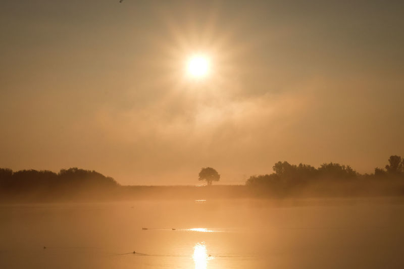 Beauty In Nature Day Fog Friesland Idyllic Lake Landscape Nature Netherlands No People Orange Sky Outdoors Reflection Scenics Sky Sun Sun Star Sunrise Sunset Tranquil Scene Tranquility Tree Tree Water