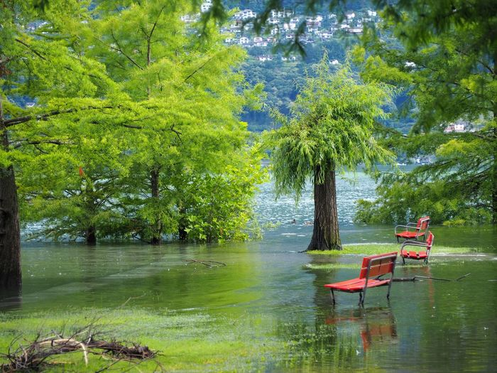 Scenic view of trees in lake