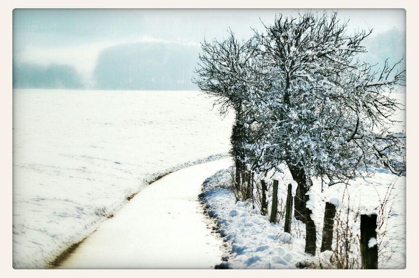 Winter Snow Winter Wonderland