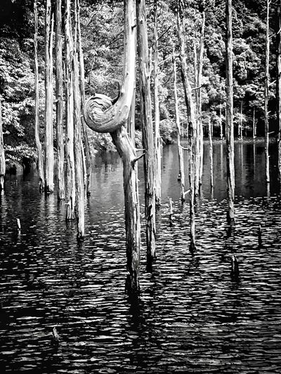 Blackandwhite Black And White Photography Mother Nature Is Amazing Tree Tranquility Reflection Nature Day Outdoors Water Lake Forest No People Tree Trunk Beauty In Nature Scenics Saikai City Japan
