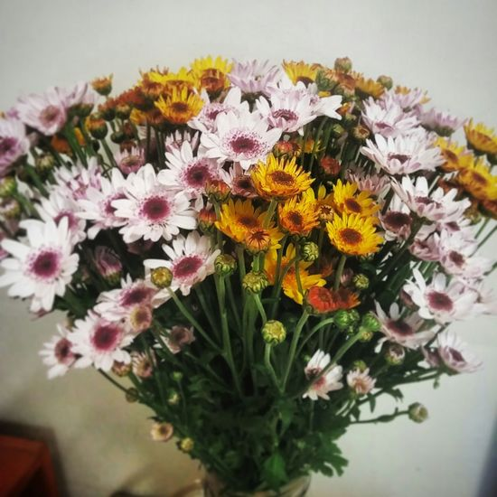 Flowers Small Flowers Crysanthemum Daily