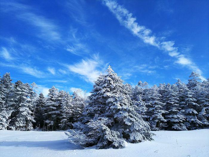 一日遅れですが😆MerryX'mas🎄 Snow Nature Sky Blue Tree Landscape Outdoors Winter Enjoying Life Wonderful Japan Landscape_Collection EyeEm Best Shots 日本 風景 自然 Cold Temperature Mountain Cloud - Sky Photography