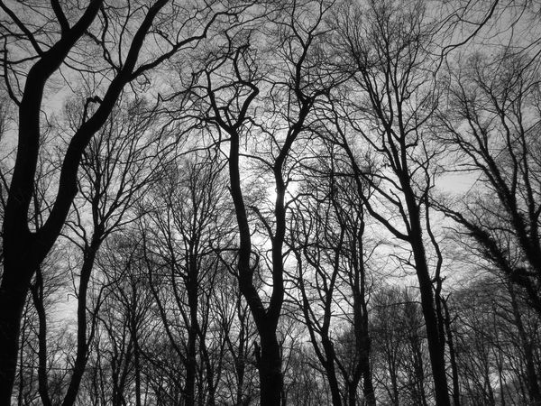 Atmospheric Mood Bald Trees Black & White Black And White Blackandwhite Forest Landscape Mystery Outdoors Sun And Trees Tranquility Tree Winter
