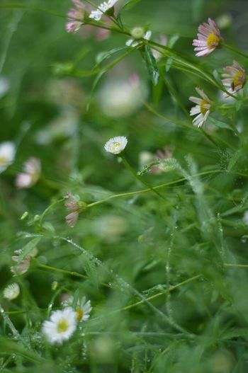 Nature_collection Ricoh GXR Carl Zeiss Planar50/1.4 Green Green Green!  Rainy Days Flowers Drop Drops