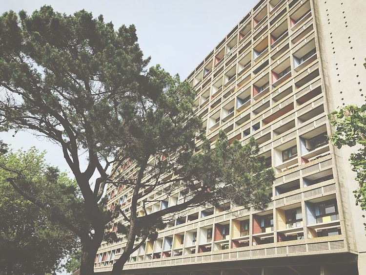 Architecture Tree Low Angle View Window Building Exterior Built Structure Day Outdoors City Apartment No People Nature