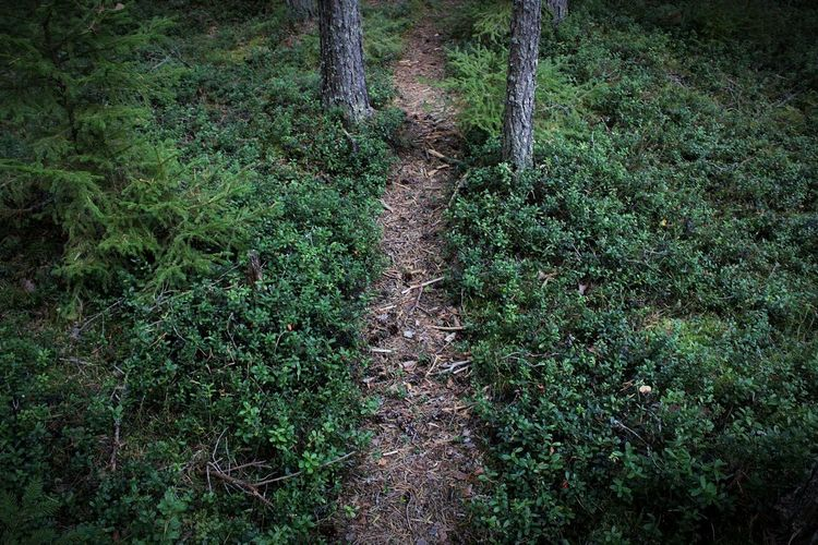 Forest Nature Photography Naturelover Nature Photography Finland Pathway Nature Enthusiast