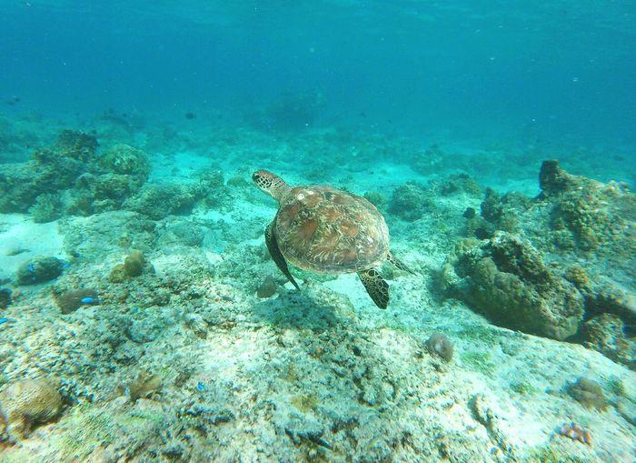 turtle underwater diving