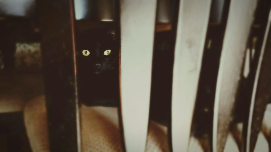 My cat, Loki. My Cat Cats I Love My Cat Cat Faded Vintage Look Purrfect