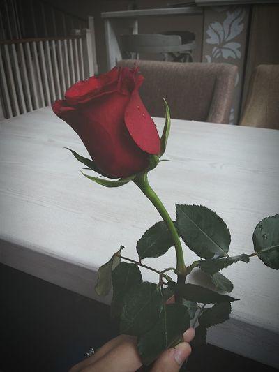 Rosé Red Rose Trandafir Love Bucureşti Happy Awesome