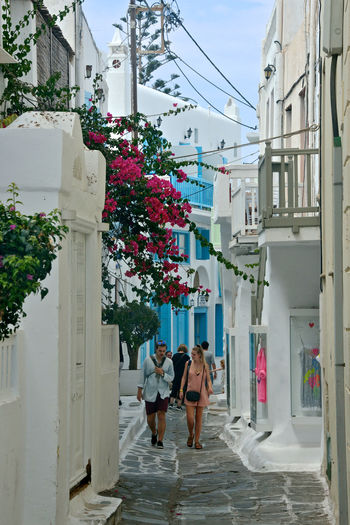 street view with white buildings and flowers in Mykonos with people walking and tourist shops . Architecture Building Exterior Built Structure Real People City Group Of People Women Adult Flower Men Walking Flowering Plant Building Full Length Day People Leisure Activity Lifestyles Nature Rear View Outdoors Couple - Relationship Blue Windows Greek Architecture Streetphotography Street Cityscape Bouganville Flower Tourist Tourism Mykonos,Greece Street View Travel Destinations