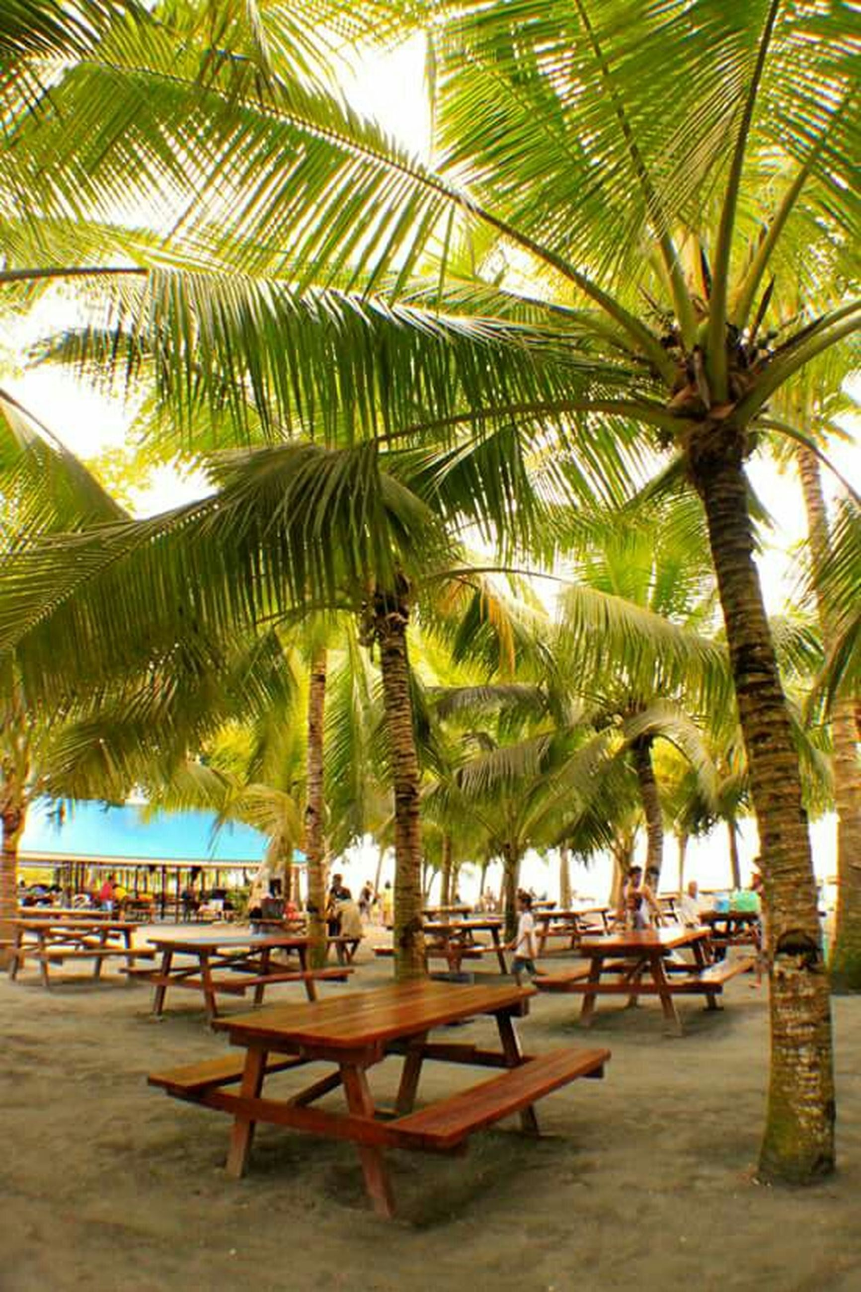 palm tree, tree, beach, tree trunk, sea, growth, tranquility, vacations, coconut palm tree, sand, nature, tranquil scene, tropical climate, palm leaf, horizon over water, sky, water, scenics, lounge chair, tropical tree