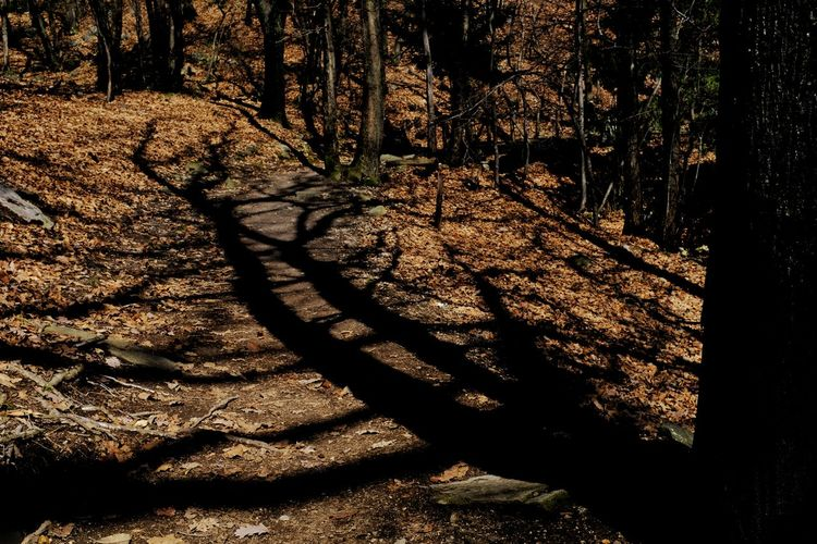 Back in the forest - of spring... is not much to see yet ... Hello World Jacklycat©2018 Beauty In Nature Focus On Shadow Forest Getting Inspired Land Light And Shadow Nature Plant Streetphotography Tree WoodLand