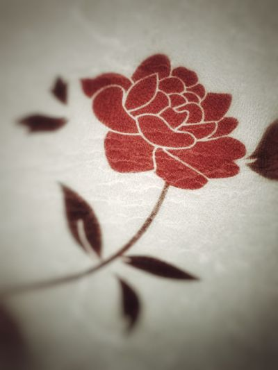 Close-up No People Indoors  Flower Decal Celebration First Eyeem Photo