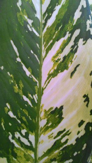 Natural Pattern Leafs Colors Jogjaku