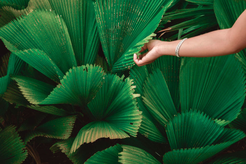 Green Color Human Body Part Human Hand Leaf People Growth Outdoors Close-up Day Nature Freshness Travel First Eyeem Photo EyeEm Indonesia Tranquil Scene Beauty In Nature The Great Outdoors - 2017 EyeEm Awards Green Green Color The Portraitist - 2017 EyeEm Awards