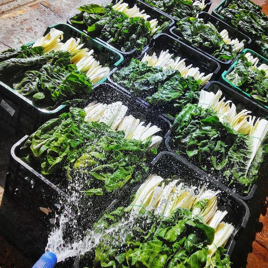 Green food! Verduras Verde Working Goodfood