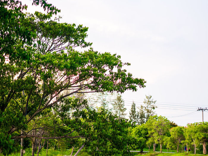 Thai view Plant Tree Sky Growth Nature Green Color Beauty In Nature Day Outdoors No People Tranquility Cable Clear Sky Electricity  Flower Branch Flowering Plant Power Line  Land Scenics - Nature