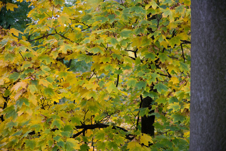 Autumn Autumn Autumn Colors Beauty In Nature Close-up Czech Republic Day Freshness Grebovka Green Color Growth Havlickovy Sady Leaf Nature No People Outdoors Park Plant Prague Tree