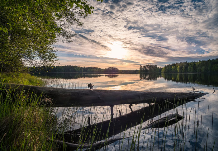 Scenic landscape with lake and sunrise at summer morning in national park Liesjärvi, Finland Atmospheric Mood Beauty In Nature Bright Deadwood  Driftwood Freshness Grass Idyllic Lake Morning National Park Nature No People Outdoors Peaceful Scenics Sky Sunlight Sunrise Sunset Tranquility Tranquility Tree Trunk Water