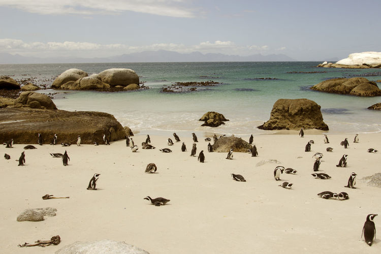 Amazing Landscapes of South Africa , Views of South Africa Water Sea Rock Beauty In Nature Sky Scenics - Nature Large Group Of Animals Rock - Object Beach Solid Group Of Animals Horizon Over Water Horizon Land Day Nature Animal Wildlife No People Animals In The Wild Marine South Africa South Africa 🇿🇦 Africa African African Beauty
