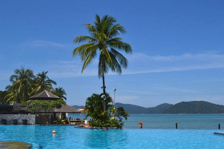 Seaview Pool Tree Water Beauty In Nature Beach Holiday Travel Blue Sky Background Relaxing Clear Sky Trees Sabah Blue Sea Travel Destinations Pool, Summer,hoy,sun,beach,vacation Holidays Vacations Sea And Sky Sea View Pool Party Pool Of Water Freshness Kota Kinabalu, Sabah Borneo