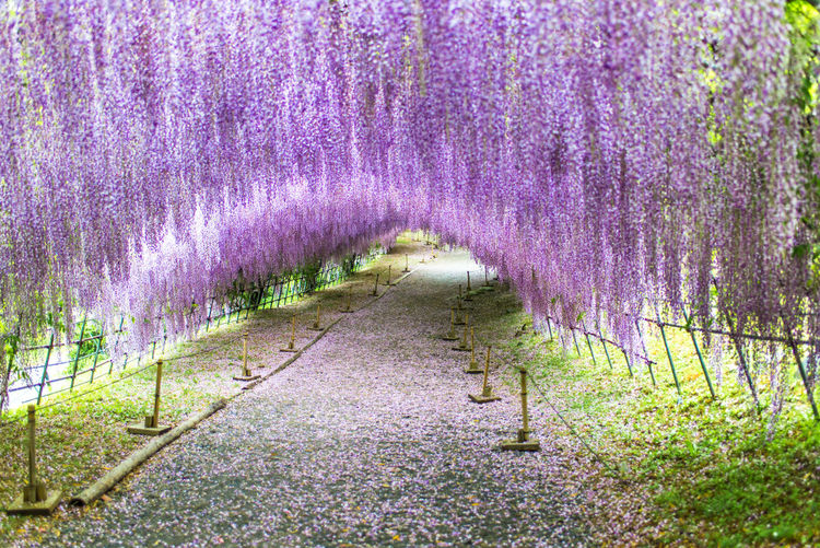 Scenic view of purple flowering plants on land
