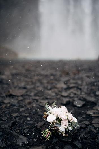 Close-up of flowering plant on land during rainy season