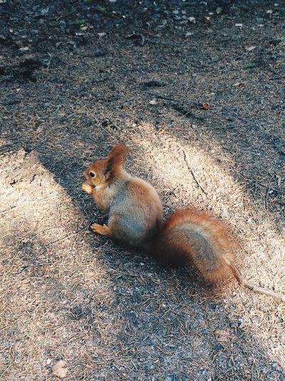 Animals белка Squirrel