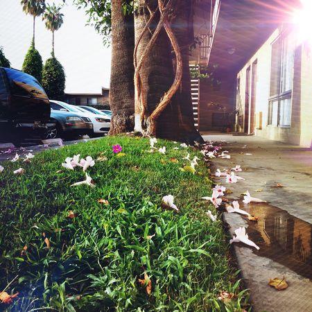 Magica lluvia de flores