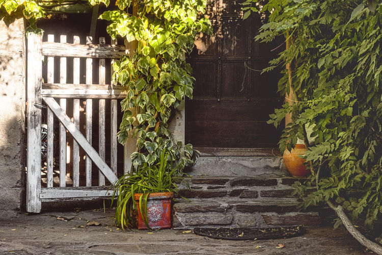 Autumn light City Life Composition Entry Green Color Stone Steps Tourist Attraction  Autumn Light Building Exterior Contrast Day Entry Details Green Colors Green Plants Leaf Light And Shadow No People Old Mansion Outdoors Plant Shadow Sunshine Tourist Destination White Color Wooden Gate