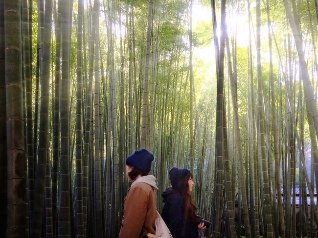 Bamboo Forest┃ Bamboo Bamboo Forest Beautiful Girl Beautiful Nature Color Portrait EyeEm Nature Lover Flash Forest Girl Girls Light Light And Shadow Model Nature Nature_collection Nature Photography Nature_collection Nature_perfection Naturelovers New Years Resolutions 2016 Portrait Sunrise Sunshine Women Who Inspire You The Great Outdoors - 2016 EyeEm Awards