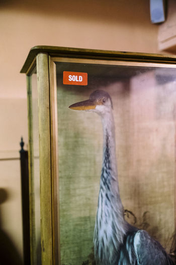Sold Animals Antique Birds Glass Cabinet Life Like Mounted Preserved Taxidermal Taxidermy Taxidermy Art