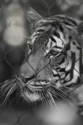 Popular Photos Animal Professionalphotography Black & White Black And White