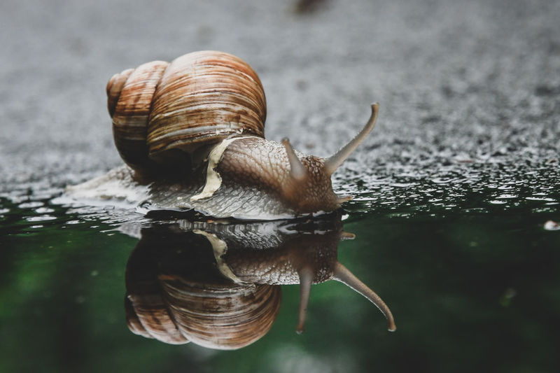 Close-up of snail on water