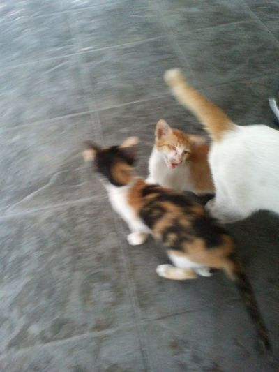 mother is shy Cat Love Philippines Keep It Blurry