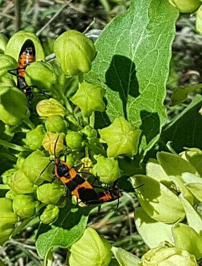 Bugs World Outdoor Life Taking Photos Wildlife & Nature